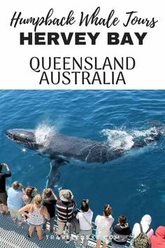 Whale watching in Hervey Bay Australia is an amazing experience you won't forget. Use these tips to go whale watching when you travel to Australia. Brisbane, Melbourne, Sydney, Australia Tourism, Australia Travel Guide, Visit Australia, Australia Holidays, Australia Visa, Queensland Australia