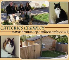 For more information simply visit at: http://www.hammerpondkennels.co.uk/nav/cattery