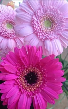 60 Ideas wall paper flores gerberas for 2019 Happy Flowers, All Flowers, Flowers Nature, Exotic Flowers, Amazing Flowers, Beautiful Flowers, Flower Wallpaper, Iphone Wallpaper, Nature Wallpaper