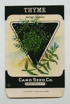Antique Card Seed Company  Thyme