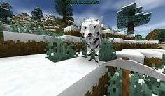 Awesome white tiger!!!!!!!! I LOVE survivalcraft!! :) i just found a white tiger today but it was not this one tho