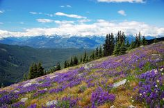Meadows and mountains by Just Peachy!, via Flickr Garibaldi Provincial Park, British Columbia July 2009