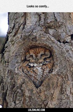 That Hole Was Made Specifically For This Owl#funny #lol #lolzonline