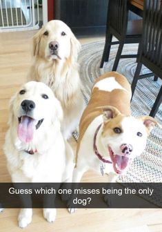 The Best Funny Pictures Of Today's Internet  RuinMyWeek.com #funny #pictures #photos #pics #humor #comedy #hilarious #joke #jokes #cute #dog #dogs #animals