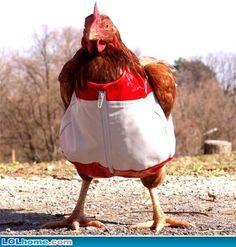 chicken clothes?