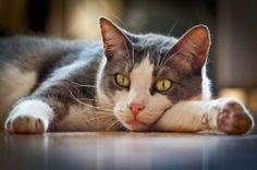 Pondering Life! Beautiful Cats, Cat Love, Funny Cats, Dog Cat, Amazing, Dogs, Life, Animals, Kawaii Cat