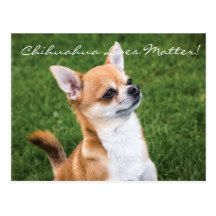 Chihuahua Lives Postcard