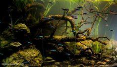 South America Aquarium Biotop