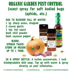 This DIY natural pest control recipe is safe to eat!
