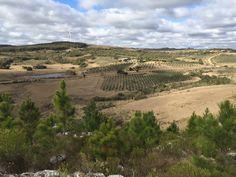 finca turistica ganadera forestal olivicola en las sierras de minas uruguay