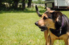 My baby. Doberman Shepherd, Dogs, Baby, Pictures, Photos, Pet Dogs, Photo Illustration, Doggies, Newborns