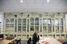 Cabinet of Curiosities of Bonnier de la Mosson housed at the Bibliotèque centrale du Muséum national d'Histoire naturelle, Paris.