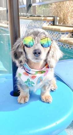 Dachshund Puppies, Dachshund Love, Weiner Dogs, Afghan Loom, Cutest Dogs, Being In The World, Dog Bandana, How To Introduce Yourself, Cute Animals