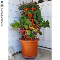 #Repost shoutout to @alohaurbanfarming!  I really want to build one of these. Great setup!  #hydroponics #foodgarden #growyourownfood #urbanagriculture #apartmentgarden #vegetablegarden #indoorgarden #harperponics  Swiss chard and romaine lettuce are bountiful and beautiful in our Aloha Vertical Victory Garden. Nutritious and tasty! #romaine #swisschard #hydroponic #containergarden #porchgarden #gardening #porchtotable #hydroponicgarden