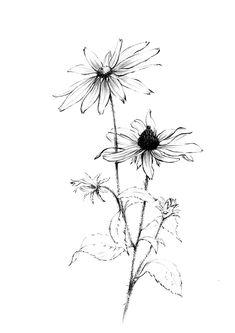 Set of 6 garden flower sketch clipart Botanical Art Hygge Flower Sketches, Art Drawings Sketches, Doodle Tattoo, Tattoo Ink, Arm Tattoo, Tattoo Drawings, Black Eyed Susan, Arte Floral, Piercing Tattoo