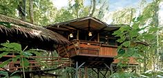 Marvel at These Awesome Treehouses that Hopefully Won't Be Cut ...