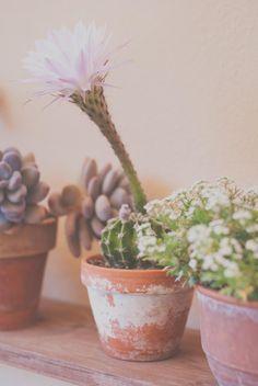 Cactus y suculentas, el complemento perfecto para la terraza   Cuidar de tus plantas es facilisimo.com