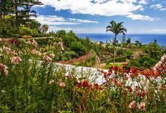 Madère - l'île aux Fleurs   Voyages Couture Funchal, Vineyard, Portugal, Couture, Outdoor, Island, Lets Go, Tourism, Travel