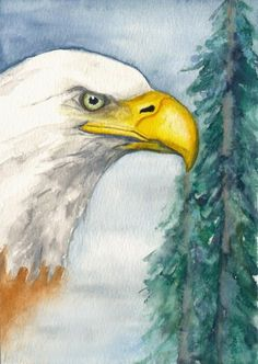 Eagle Art Watercolor Pictures, Watercolor Bird, Watercolor Paintings, Doodle Drawings, Doodle Art, Pencil Drawings, Eagle Pictures, Eagle Art, Water Colors