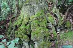 arbre balade en nature aveyron blogueuse bio toulouse