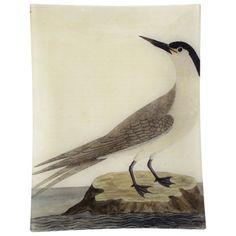 John Derian Company Inc — #38 - Greater Sea Swallow