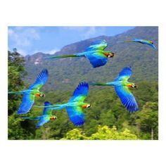 Pretty Birds, Love Birds, Beautiful Birds, Animals Beautiful, Tropical Birds, Exotic Birds, Colorful Birds, Colorful Parrots, Animals And Pets