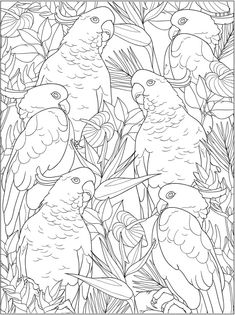 Creative Haven Truly Tropical Coloring Book Dover Publications Free Adult Coloring Pages, Animal Coloring Pages, Coloring Book Pages, Printable Coloring Pages, Dover Publications, Color Pencil Art, Fabric Painting, Colorful Pictures, Bunt