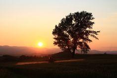 夕暮れの小麦畑