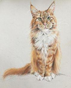 #pastelmat #katze #chat #greeneyes #Rusty #redcat #workinprogress #drawing #coloredpencil #carandache