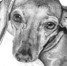 Dachshund Clube - Colette Theriault