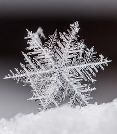 A single snowflake displays its fragile crystal structure in Siebersdorf, Germany in February Winter Snow, Winter Time, Earth Photos, Deep Sea, Great Photos, Life Is Beautiful, The Great Outdoors, Snowflakes, Art Photography
