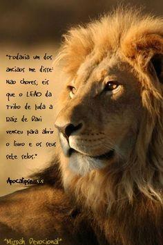 Leão da tribo de judá.  Apocalipse 5:5