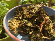 Chips de kale (vege) Kale, Cooks Illustrated Recipes, Sprouts, Advice, Collard Greens, Cabbages, Cabbage