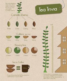 #Health #Infographics - Tea Trivia #Infografia