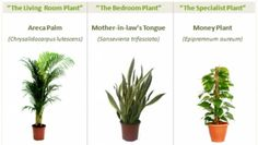 Tres plantas que limpian, refrescan el aire y aumentan la productividad