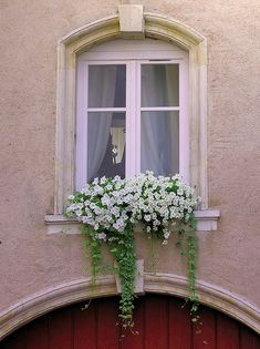 Window box filled with white petunias, Nancy, France - Jill's Garden Window Box Flowers, Balcony Flowers, Window Boxes, Arched Windows, Windows And Doors, Garden Windows, White Gardens, Container Gardening, Succulent Containers