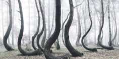 This magical-looking forest in Poland looks straight out of a fairytale.