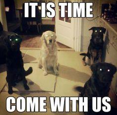 Dog eyes!!