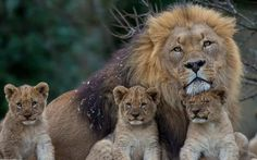 Stunning Wildlife (@SWildlifepics) | Twitter