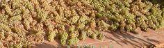 Wine and Gastronomy in Piedmont, Italy, Alba, Barolo wineries, Barbera, Nebbiolo, Dolcetto, Barbaresco wineries, DOC Zones
