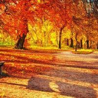 vibrant colors of autumn leaves in a park hdr Hdr, Autumn Leaves, Vibrant Colors, Country Roads, Painting, Google, Lights, Paisajes, Photos