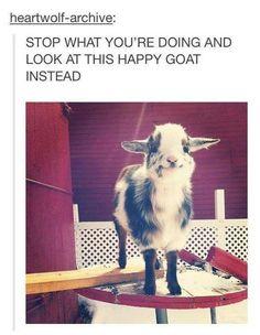 Happy goat - Imgur