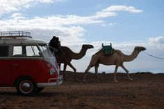 Vw bus and camels probably the most awesome pic ever!