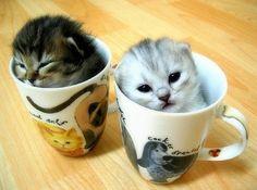 cat cup.