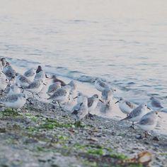 【puchi.chi25】さんのInstagramをピンしています。 《「餌を求める海鳥」  #海鳥#鳥#海#夕焼け#秋#bestjapanpics#wu_japan#IGersJP#Japan_Daytime_View#tv_bridges#RECO_ig#Far_EastPhotoGraphy#ptk_japan.#icu_japan#ig_cameras_united#canon#japan#カメラ#写真#photo#instagram》