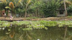 Kerala | Und Das Ist Erst Der Anfang #reiseblog #backpacking #indien #kerala  #günstigreisen #UndDasIstErstDerAnfang #bootsfahrt #seerosen #impressionen