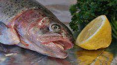 Die Forellen müssen küchenfertig zubereitet werden. Kiemen sind hierbei zu entfernen und die Fische sorgsam auszuwaschen.