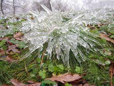 Христо от Лясковец: Ледена Епоха по лясковски...в гората!