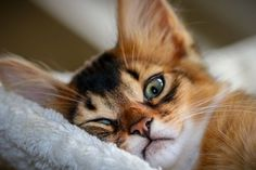 Outstanding Cats and kittens tips are readily available on our site. Cute Kittens, Cute Little Kittens, Cats And Kittens, Funny Animal Videos, Funny Animal Pictures, Funny Animals, Cute Animals, Pretty Cats, Beautiful Cats