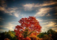 Around Nagano – Onsens | Pursuing Wabi